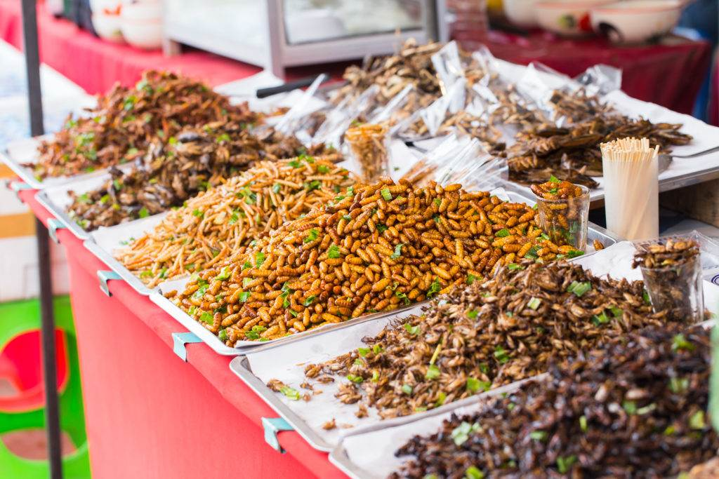 Bug fried sale business Asian Insect Snack food High Protein from nature.