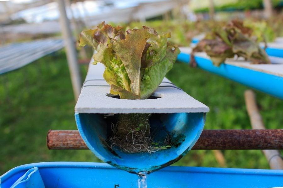 Aquaponik –  Hybrid  Lebensmittelproduktion